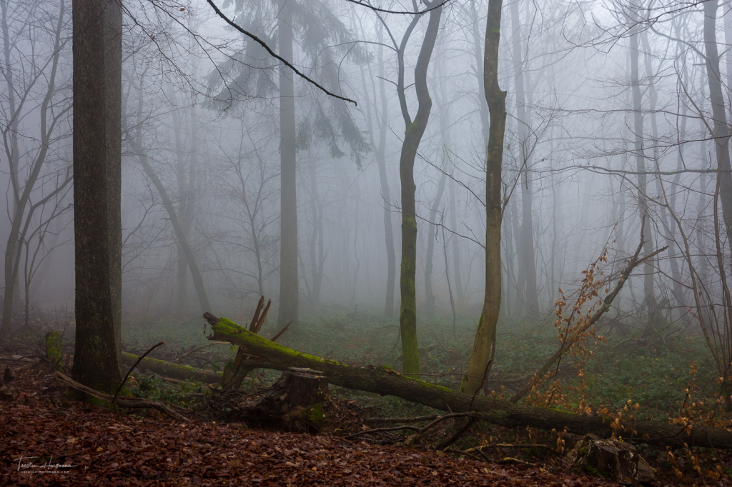 Nebelwald Orscholz - Saarland