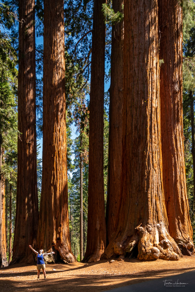 Sequoia Nationalpark - Kalifornien